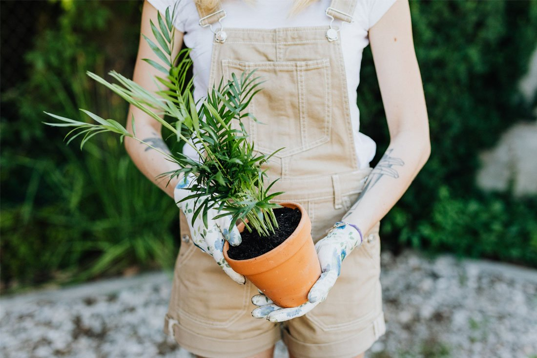 Woman in holding a plant in a pot while gardening